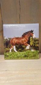 Kalender Horses  2020 Allaluna