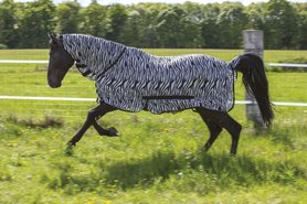 Zebra vliegendeken met hals Riding World