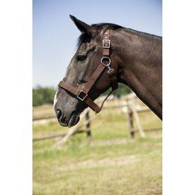 Halster Norton Trekpaard
