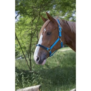 Halster Equitheme strass Turquoise