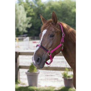 Halster Equitheme strass Roze