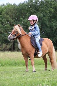 F.R.A. Barebackpad Dardo Shet/Pony